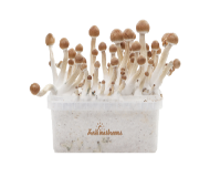 FreshMushrooms® Kit de cultivo
