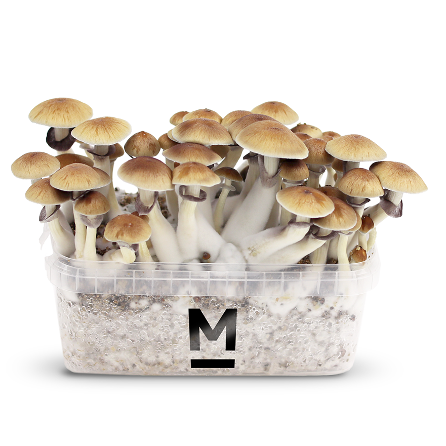Magic Mushroom Grow Kits Mondo®
