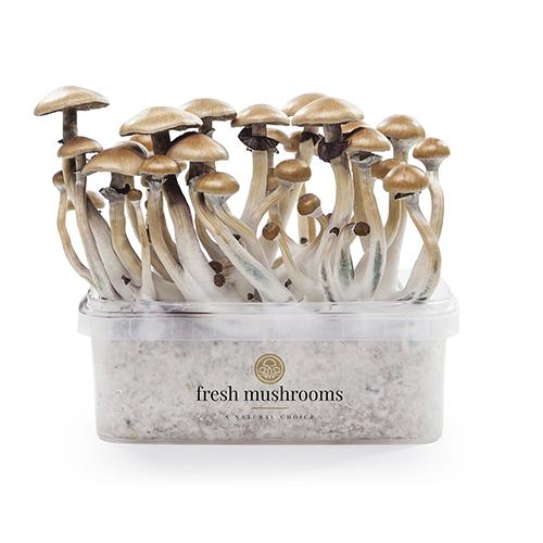 Magic Mushroom Grow Kits FreshMushrooms®