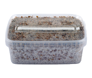 magic mushroom grow kits with active mycelium