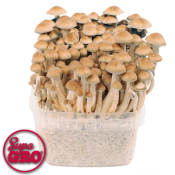 magic mushroom grow kit