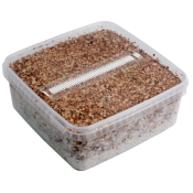 1x Extra large grow box  containing substrate with active mycelium