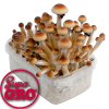Orissa India | SupaGro Magic Mushroom Grow Kit