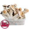 Supa Envy | SupaGro Magic Mushroom Grow Kit