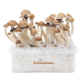 McKennaii XP | Fresh Magic Mushrooms Grow Kit