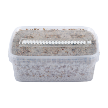 random magic mushrooms myclium grow kit