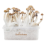 Mexican XP | Fresh Magic Mushrooms Grow Kit
