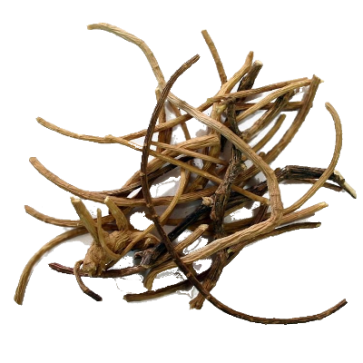 African Dream Root | Silene Capensis | 5 grams