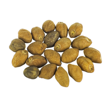 Ololiuqui seeds | Rivea Corymbosa | 20 seeds