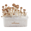 Photo FreshMushrooms® grow kit  Amazon