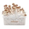 Photo  B+ XP FreshMushrooms® Grow Kit