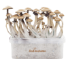 Photo FreshMushrooms® grow kit Golden Teacher