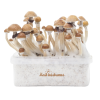 Photo McKennaii XP FreshMushrooms® Grow Kit