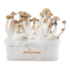 Photo Mexican XP FreshMushrooms® Grow Kit