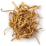 Cordyceps Mushroom Supplement Capsules | Mushrooms4life