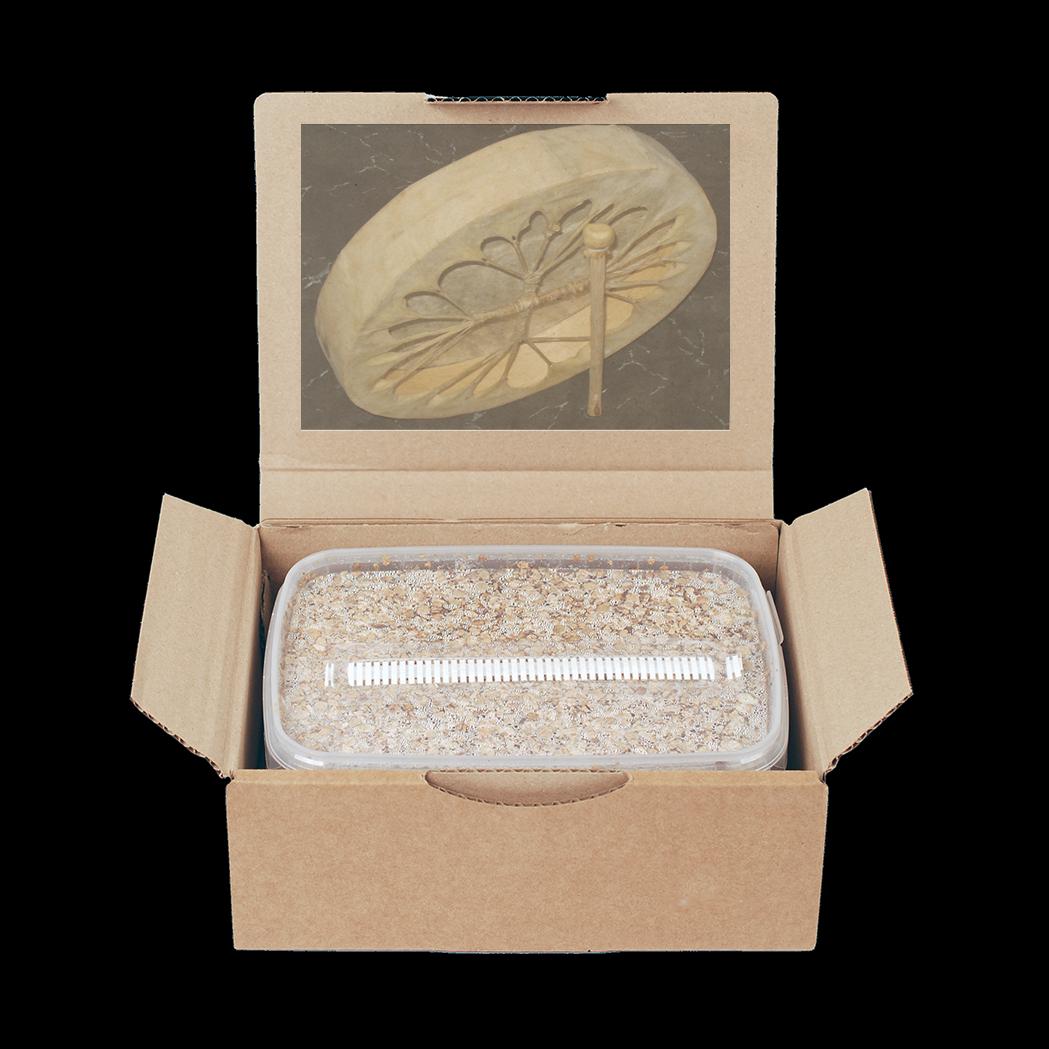 MycoMate® Grow Kit Golden Teacher