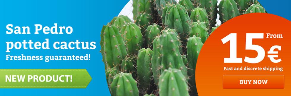 San Pedro Mescaline Cactus