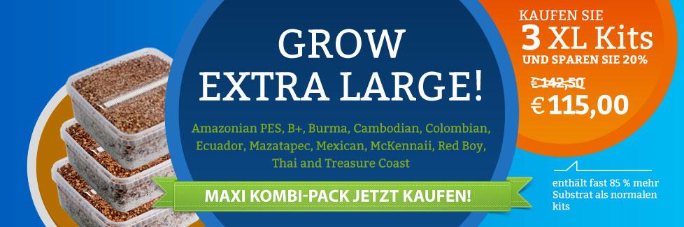 Kombi XL Zauberpilze Zuchtboxen kaufen