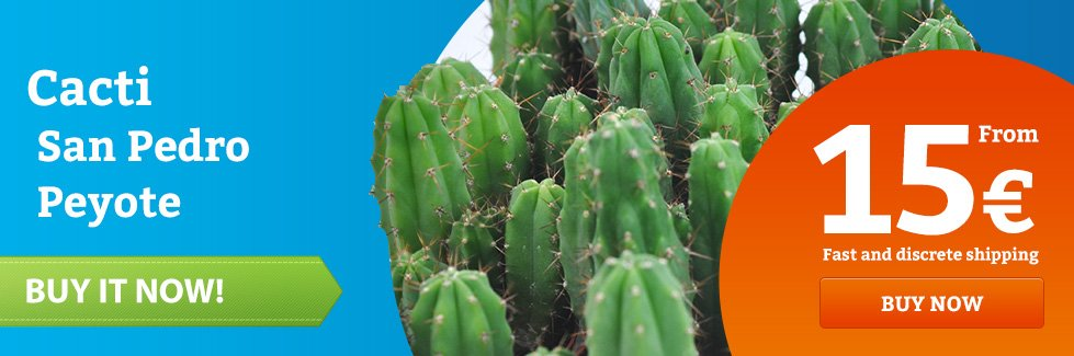mms-cactus-offer-banner