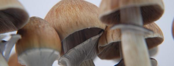 Paddo's kweken:  Verschillende cultiveringsmethoden en groeitechnieken | Deel 1