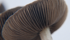 Gills of the Magic Mushroom
