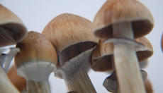 How to grow magic mushrooms ? Different cultivation methods and grow teks Part 1