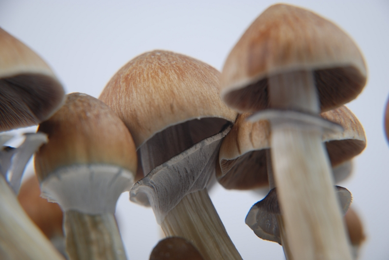 How to grow magic mushrooms: Different TEKS for Mushroom Cultivation