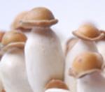 NEW: Supa Envy (Penis Envy) 100% Myceliumbox