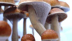 Magic Mushrooms and LSD not linked with mental health problems