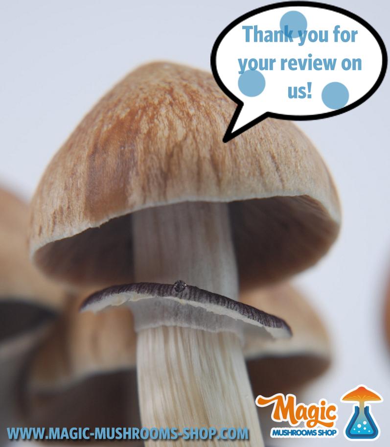 Reviews about magic mushroom grow kits - Top 10 | Magic Mushrooms
