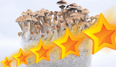 Top 10 best rated and funniest product reviews on our Magic Mushroom Grow Kits