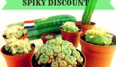 Enjoy the magic mushroom growing experience, with our monthly discounts