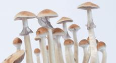 Photos of the Treasure Coast magic mushroom growkit