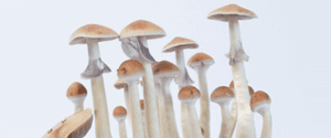 Treasure Coast Magic Mushrooms