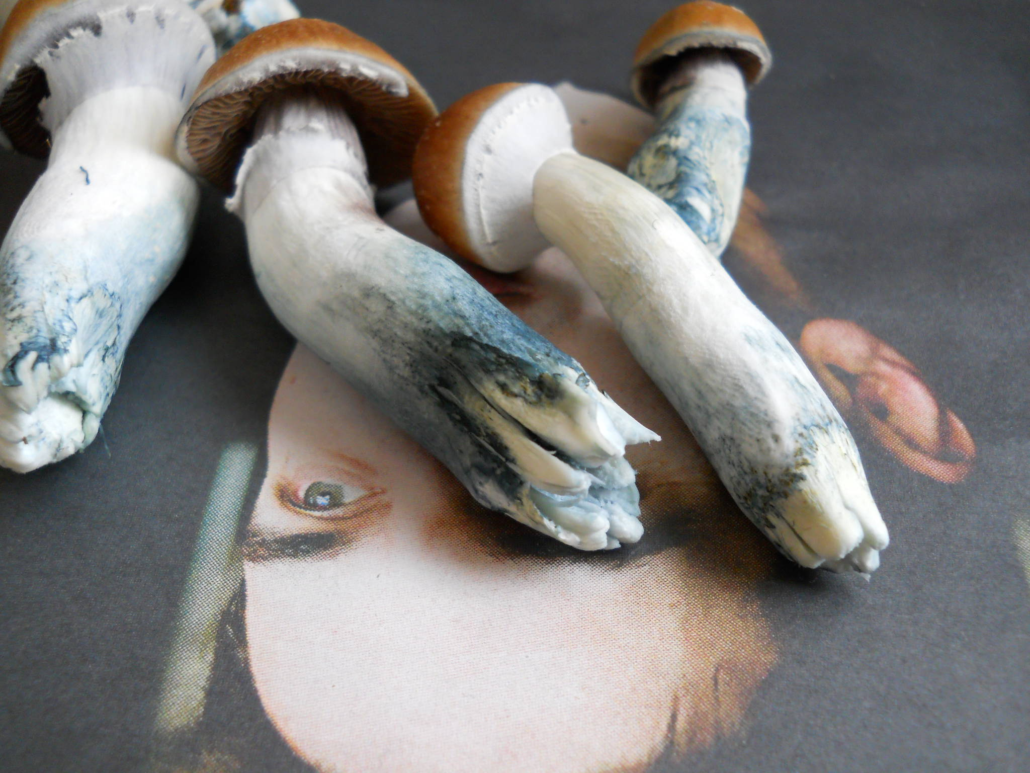 Psilocybe and Psilocin :Blue Stained Magic Mushrooms