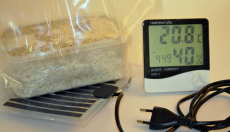 What is the ideal temperature to grow magic mushrooms?