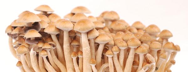 easy magic mushrooms recipe