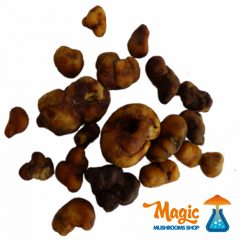 Your personal magic truffles dosage guide!