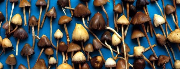 The best way to start growing magic mushrooms