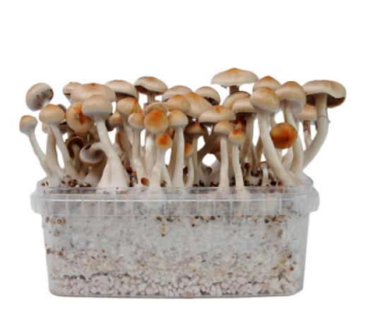 magic-mushrooms-varieties-2