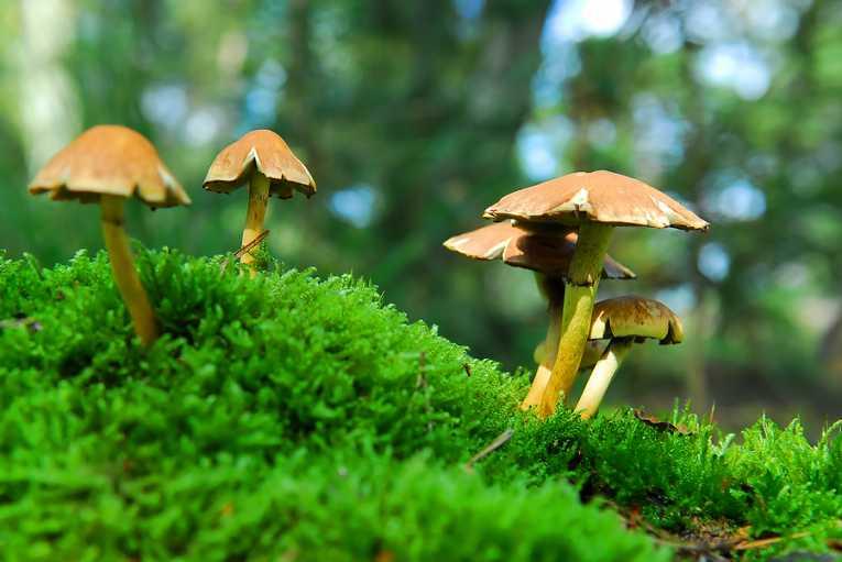 Magic Mushrooms varieties   Magic Mushrooms Shop Blog