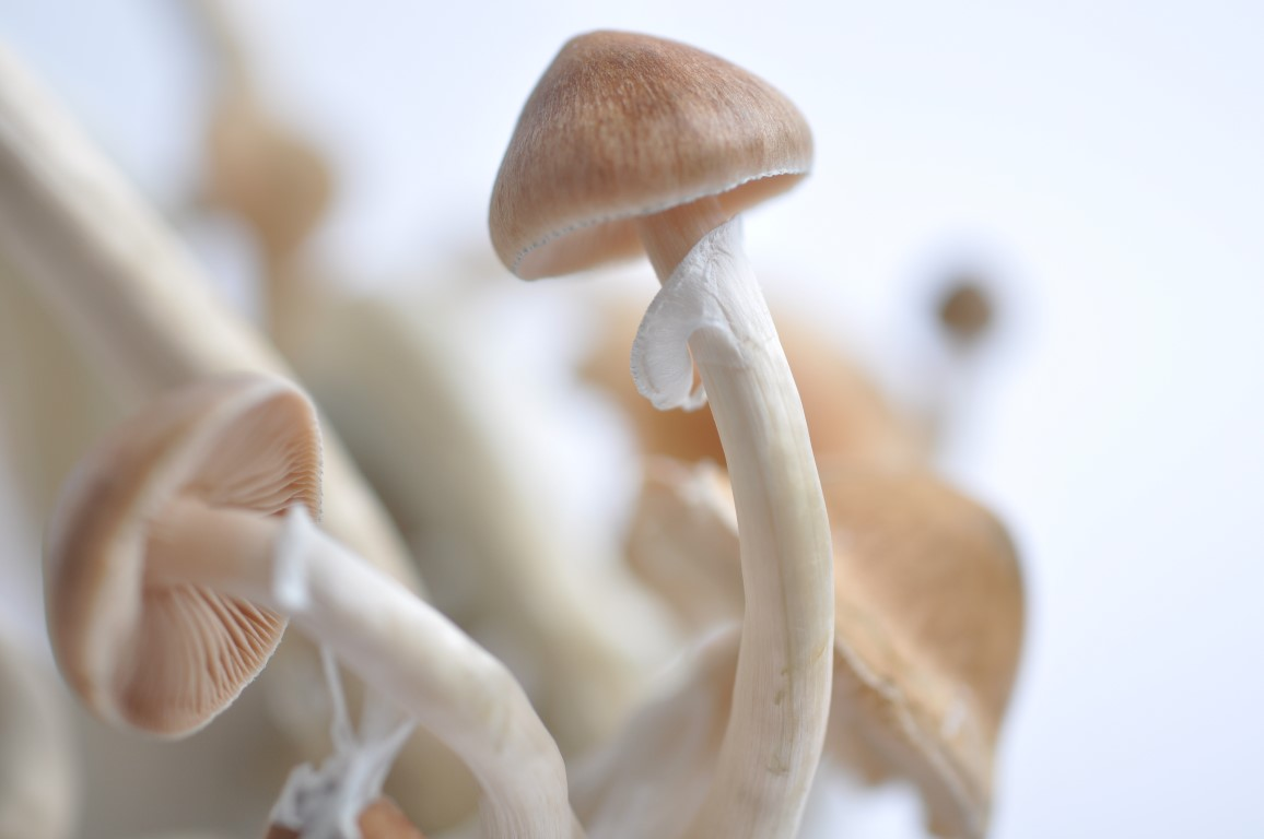 How to grow magic mushrooms? Different cultivation methods and grow