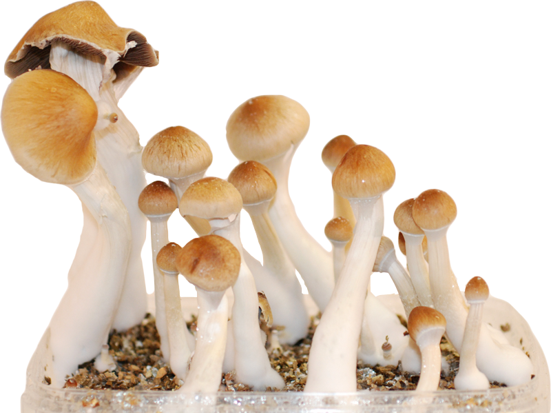 Your 5 favorite magic mushroom strains! | Magic Mushrooms