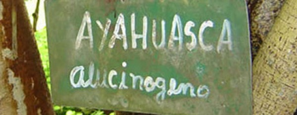 Ayahuasca: its history, use, effects, ingredients and safety