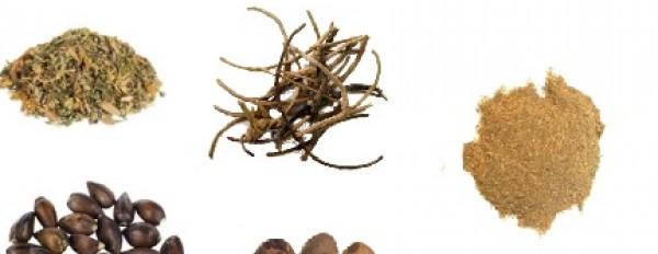 The Magic Mushrooms Shop most popular Herb Stimulants