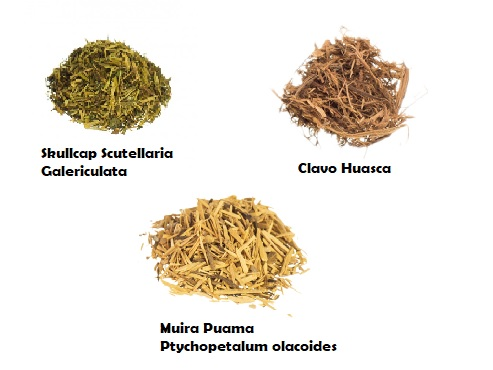 Herbs of the Month Magic Mushrooms Shop