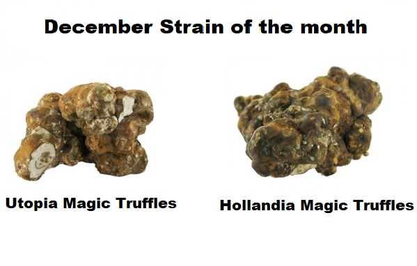 Utopia Magic Truffles and Hollandia Magic Truffles