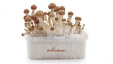 FreshMushrooms kits: A refreshing Alternative!