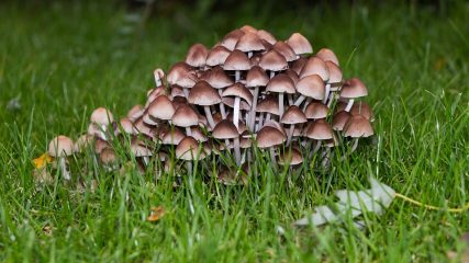 Nature mushroom