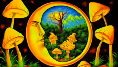 Magic Mushroom Dosage Guide!